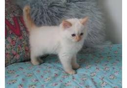 Nice cat,  Yati fo sale