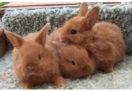 Three fantastic rabbits for sale